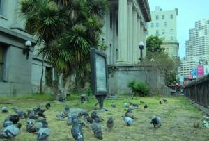 Pigeons #1